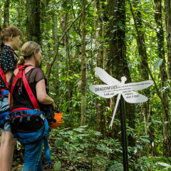 Learning About the Daintree Rainforest - Daintree Cape Tribulation Ziplining Tour