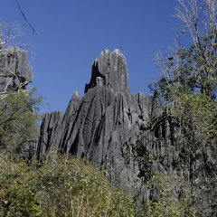 Limestone casts at Chillagoe Caves