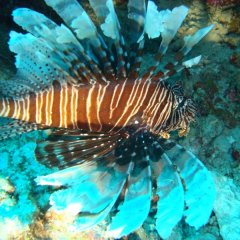 Lion Fish stay well away from these fish