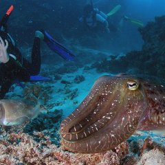 Liveaboard Scuba Dive Trip Great Barrier Reef | Octopus