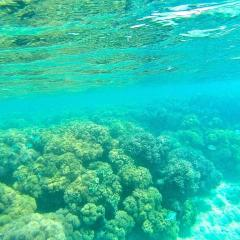 Lizard Island Snorkeling the Great Barrier Reef in Australia