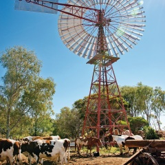 Cattle and horses at the windmill looking for water in Longreach