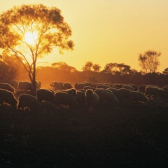 Longreach Sheep Station