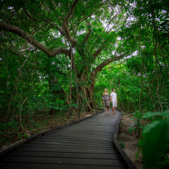 Lovely boardwalks on Green Island
