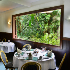 Lunch With A Rainforest View | Private Tour