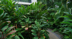 Lush Tropical Gardens - Trinity Beach Club Holiday Apartments