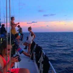 Make Friends For Life On The Great Barrier Reef | Liveaboard Reef Trip | 2 Days 1 Night