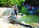 More information aboutKuranda | Skyrail | Hartleys Crocodile Adventures | DUT KHC