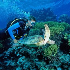 Make The Most Of Your Great Barrier Reef Experience | Diving With Turtles | Liveaboard Trips From 1 Night To 6 Nights