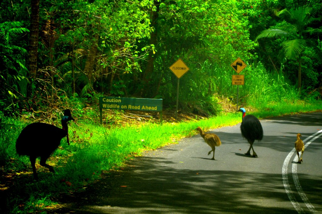 Half Day Daintree River Amp Cassowary Falls Am Tour From