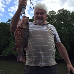 Mangrove Jack | Cairns Shared Fishing Charters