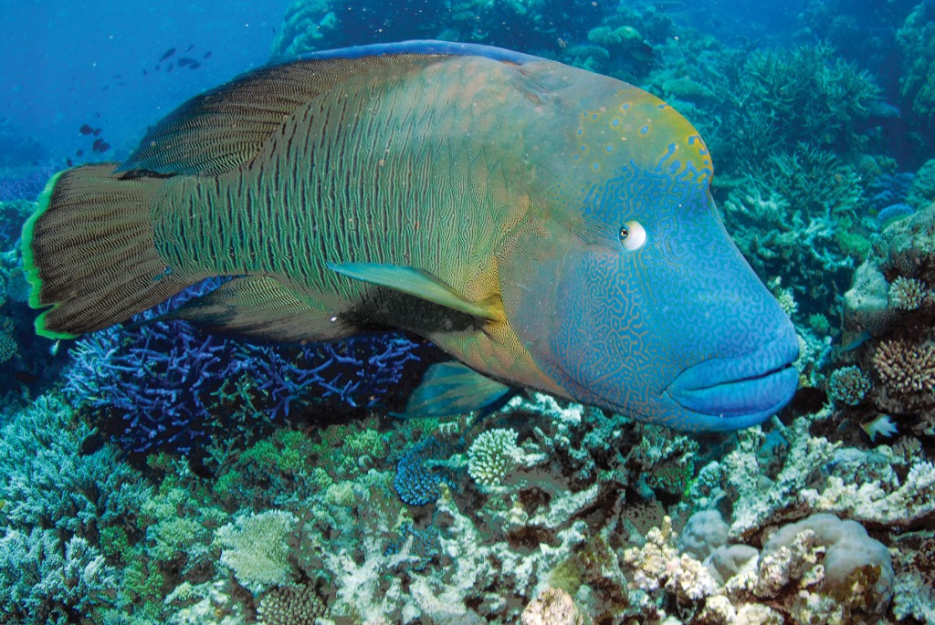 cairns attractions cairns scuba diving cairns attractions On great barrier reef fish