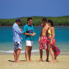 Enjoy a Marine Biologist tour whilst on a snorkel tour to Low Isles from Port Douglas in Queensland Australia