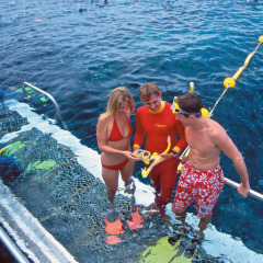 Snorkel tuition provided | Outer Great Barrier Reef trip departing from Port Douglas