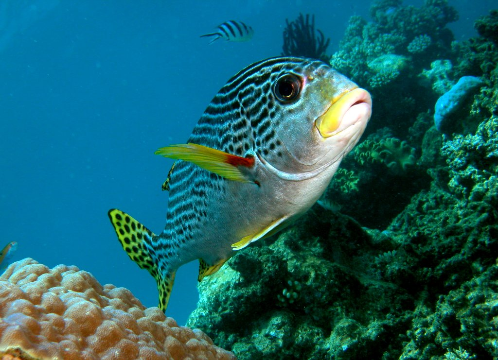 Cairns tours attractions the cairns port douglas for Great barrier reef fish