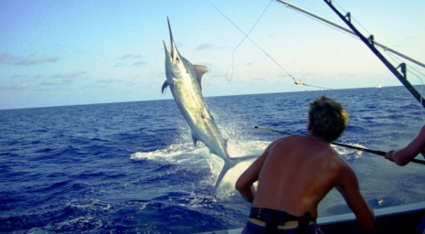 Marlin Fishing charter on the Great Barrier Reef in Australia