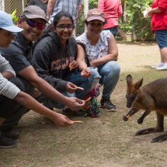Meet a Wallaby at Lynch Haven animal refuge in the Daintree Rainforest