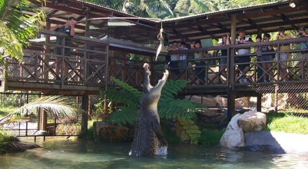 Meet Jumping Jack At Rainforestation | 1 Day Experience Ex Cairns Incl Skyrail