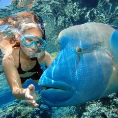 Meet resident photo bomber Wally the Maori Wrasse