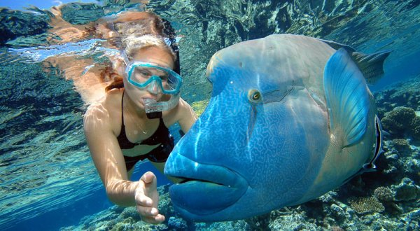 Dreamtime Great Barrier Reef Trip | Meet Resident Photo Bomber Wally The Maori Wrasse