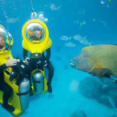 Meet Wwally the Humphead Maori Wrasse on your Scuba Doo Tour on the Great Barrier Reef