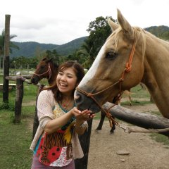 Meet Your New Four-Legged Friend on Cairns Horse Riding Tour