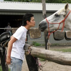 Meeting Your Horse for the Day on Cairns Horse Riding Tour