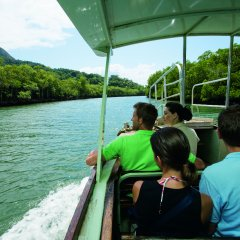 Daintree River Cruise on 3 Day Cooktown 4WD Tour