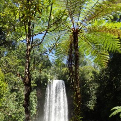 Millaa Millaa Falls | Iconic Tropical North Queensland Waterfall | Full Day Tour