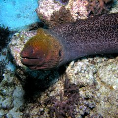 Moray Eel On The Great Barrier Reef | Reef Trips Leaving From Cairns North Queensland