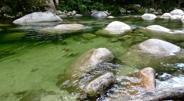 Mossman Gorge 20km North Of Port Douglas Half Day Tour