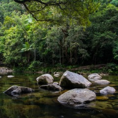 Mossman Gorge and other rivers in the Daitnree are full of granite boulders