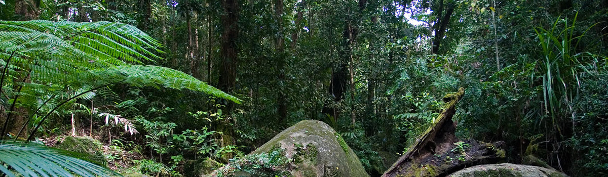 Mossman Gorge | Daintree & Cape Tribulation Rainforest Tours Queensland Australia