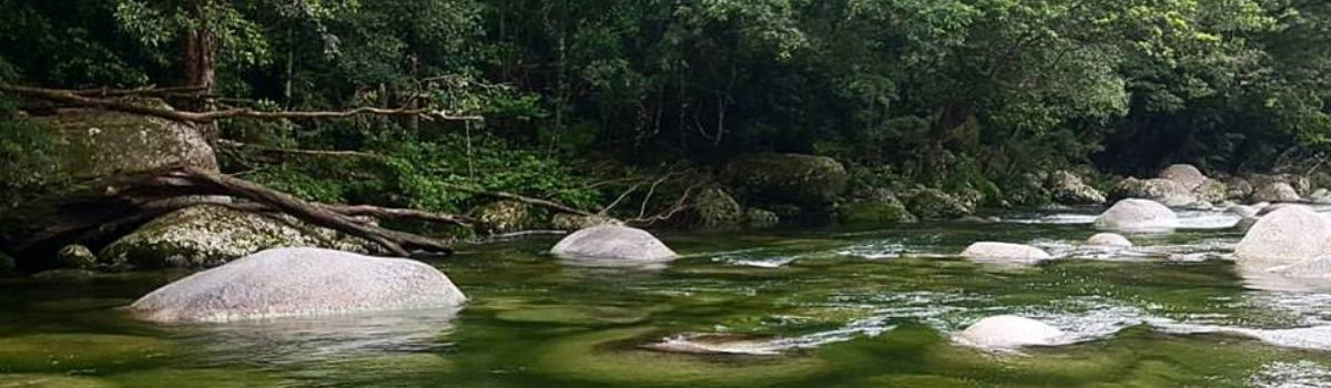 Mossman Gorge & Daintree River Private Charter