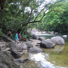 Mossman Gorge half day tour