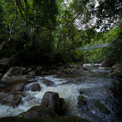Mossman Gorge Half Day Tour | Ex Port Douglas | Suspension Bridge