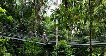 Mossman Gorge Tours - Small Group Tours - Luxury overland vehicle for Cape Tribulation
