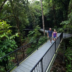 Mossman Gorge Walk | 1 Day Tour | Small Group