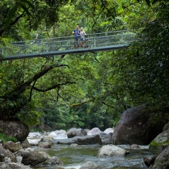 Mossman Gorge Walk | 1 Day Tour | Departs Cairns & Port Douglas