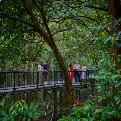 Mossman Gorge Tours Walk in the Rainofrest | 1 Day Tour | Small Group Tour