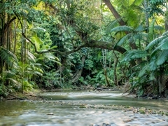 Mossman River drift snorkel tour