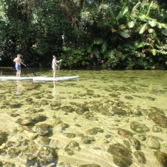 Mossman Gorge Stand Up Paddle Board Tour | Small Group Tour | Port Douglas