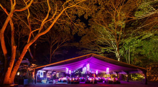 Multi award winning night time attraction in Port Douglas