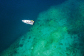 Charter Yachts Great Barrier Reef - Aerial View Charter Boat | Cruising Range Of 3,000 Nautical Miles | Great Barrier Reef Charter Boat