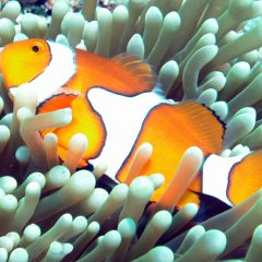 Dreamtime Dive & Snorkel | Nemo Great Barrier Reef Cairns