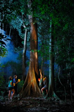 Night Walk In The Daintree Rainforest With Jungle Surfing | Tropical North Queensland