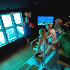 Non-swimmers love the underwater observatory on the Great Barrier Reef Pontoon