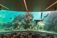 Observatory Living Reef |  Daydream Island Resort, Great Barrier Reef