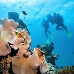 Offer scuba diving on the Great Barrier Reef to your groups