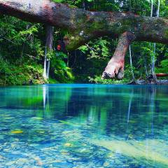 One Of Many Creeks In The Daintree | Full Day Tour From Cairns & Port Douglas